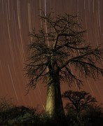 Baobab and startrail