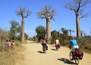 Baobab Alley in Mada