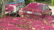 Old cars covered wit