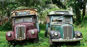 Old Morris trucks in