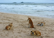 Beach dogs relaxing